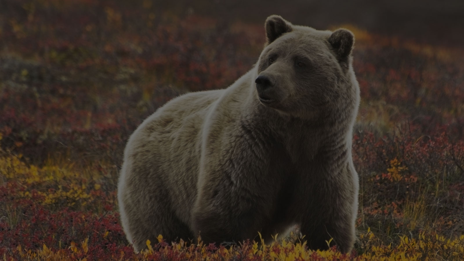 <h4>PROTECTING ENDANGERED SPECIES</h4><h5>We're calling for the Endangered Species Act to be maintained and strengthened, not weakened as it was in 2019.</h5><em>NancyS via Shutterstock.com</em>